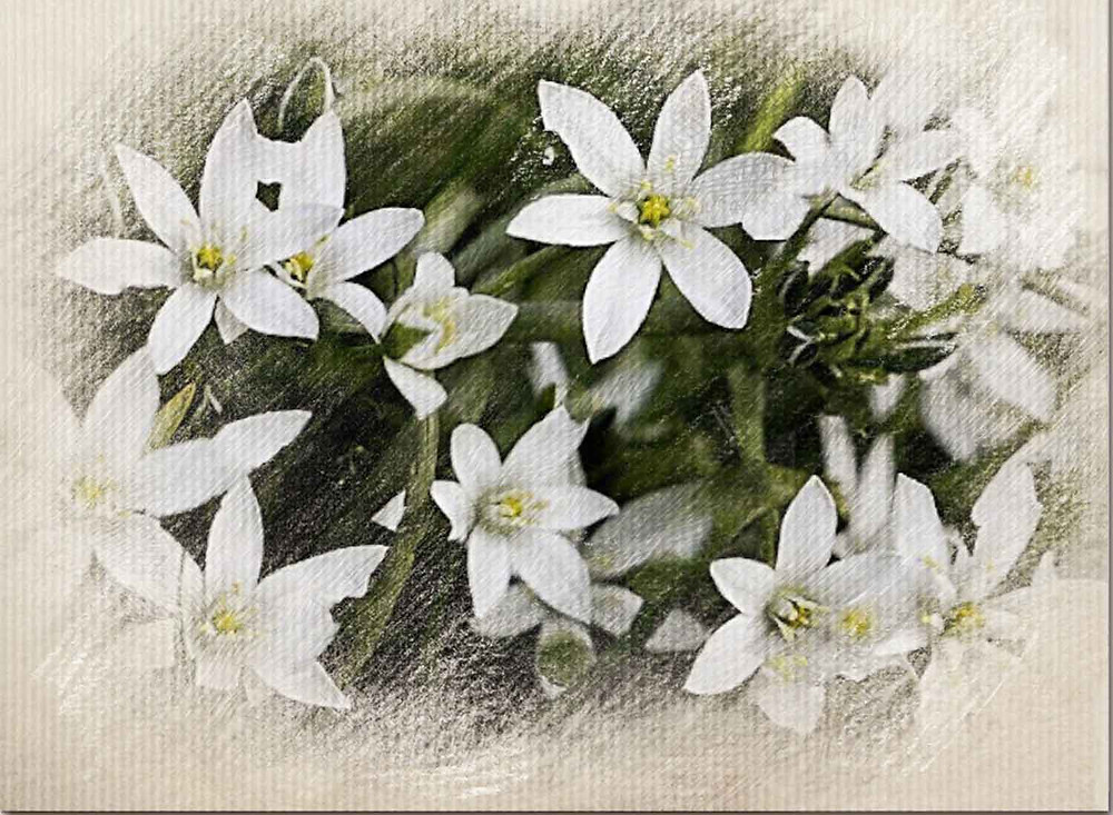 Star of Bethlehem, Bach Flower Therapy, Trauma and Bereavement , Shock