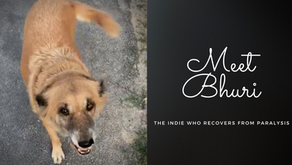 Meet Bhuri, a Sweet,Sweet Streetie