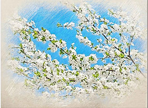 Cherry-Plum-outer.jpg