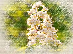 White-Chestnut-outer.jpg