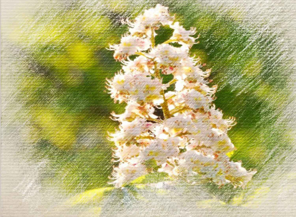 White Chestnut, Bach Flower Remedy, Repetitive thoughts, Obsessive behaviours