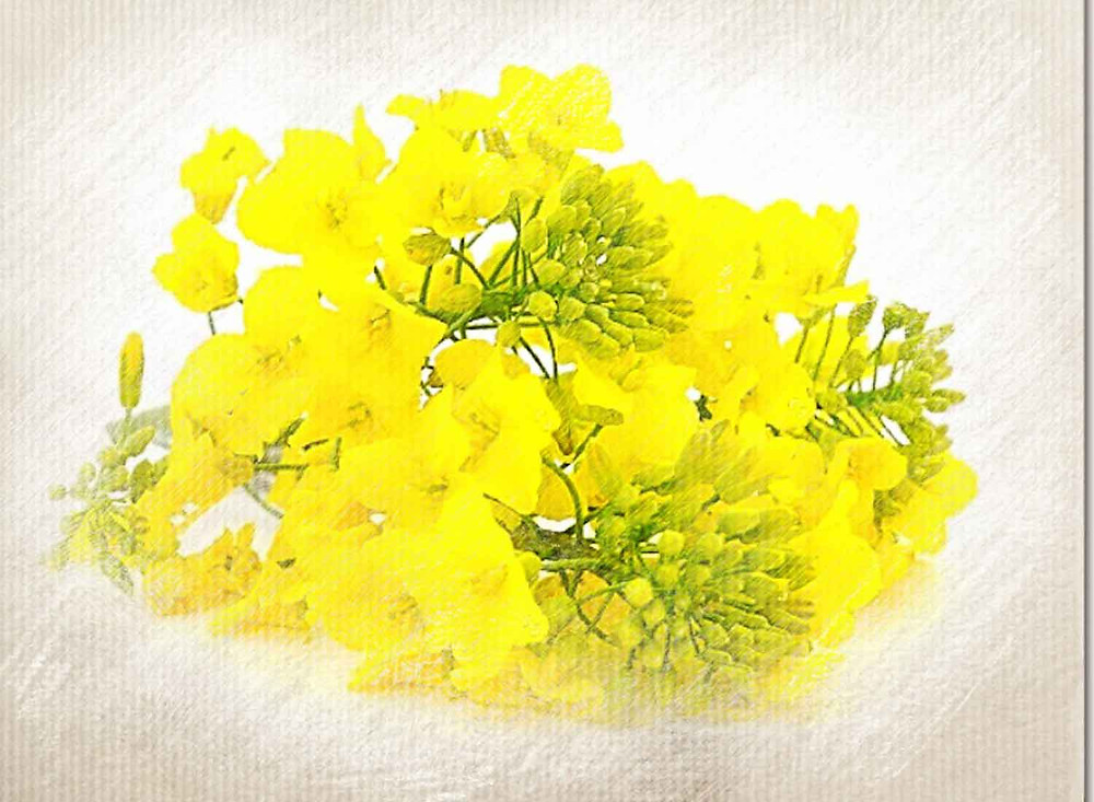 Mustard, Bach Flower Remedy, Gloominess, Depression. Sadness