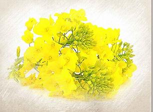Mustard-outer.jpg