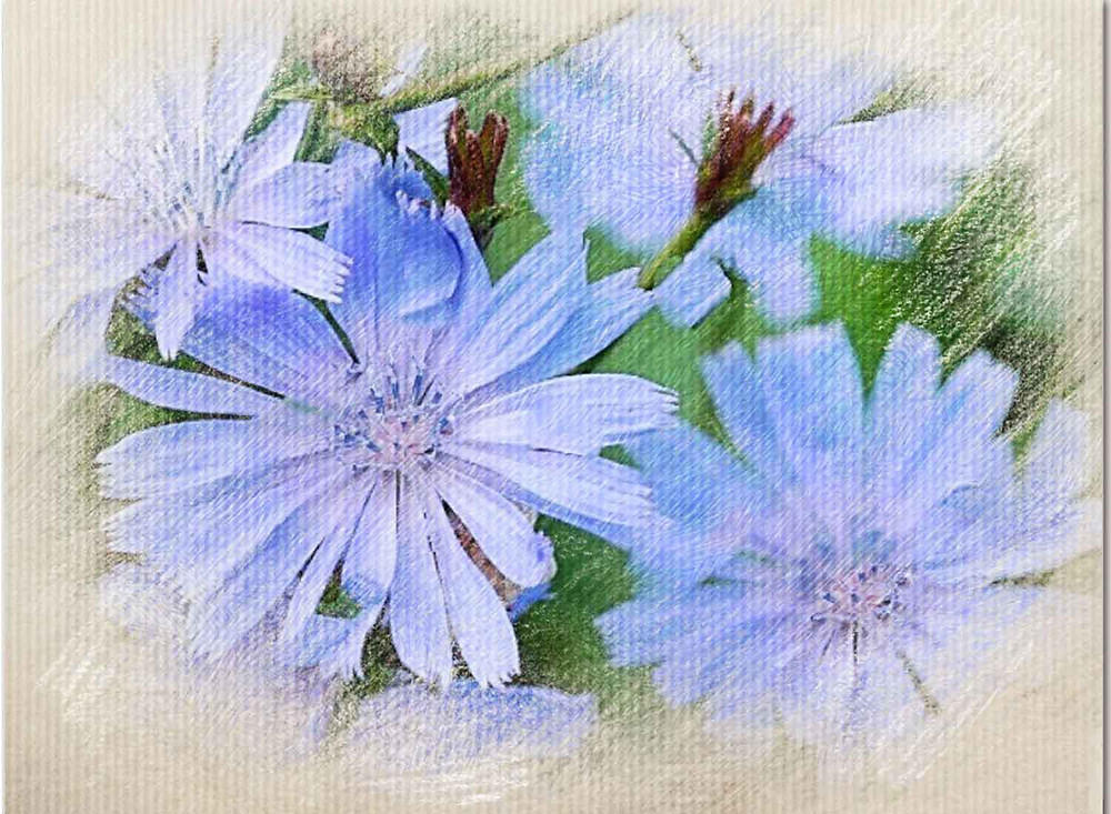 Chicory, Bach Flower Remedy, Selfish, possessive