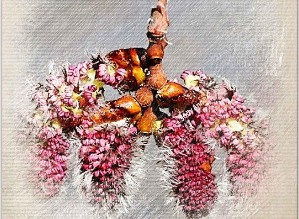 Aspen, Bach Flower Remedy, Unknown fears