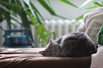 cat-2520988_1920.jpg