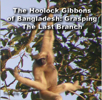 """""""HOOLOCK GIBBONS: GRASPING THE LAST BRANCH"""""""