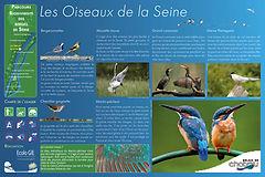 Chatou Ecolo GIE Oiseaux Seine.jpg