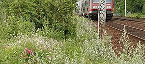 Talus ferroviaire, Auteur Aurelien Hugue