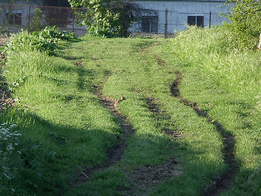 Chemin d herbes, Auteur Aurelien Huguet.