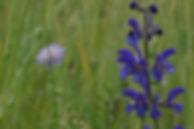 Prairie Marly 10 juin20 AH (9).JPG