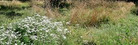 Label Gestion Ecologique - prairie Monts