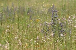 Prairie a Viperine, Auteur Aurelien Hugu