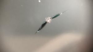 エスクァイアの飛び石修理