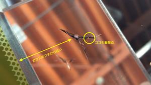 ガラスの淵から近いヒビの修理。