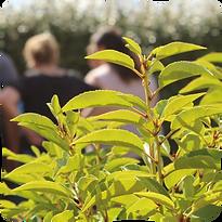Laby'arbustes - Labyrinthe d'arbustes - Sortie nature à Romagne