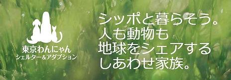 東京わんにゃんシェルター&アダプション.jpg