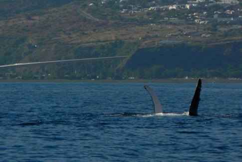 baleine st paul.jpg