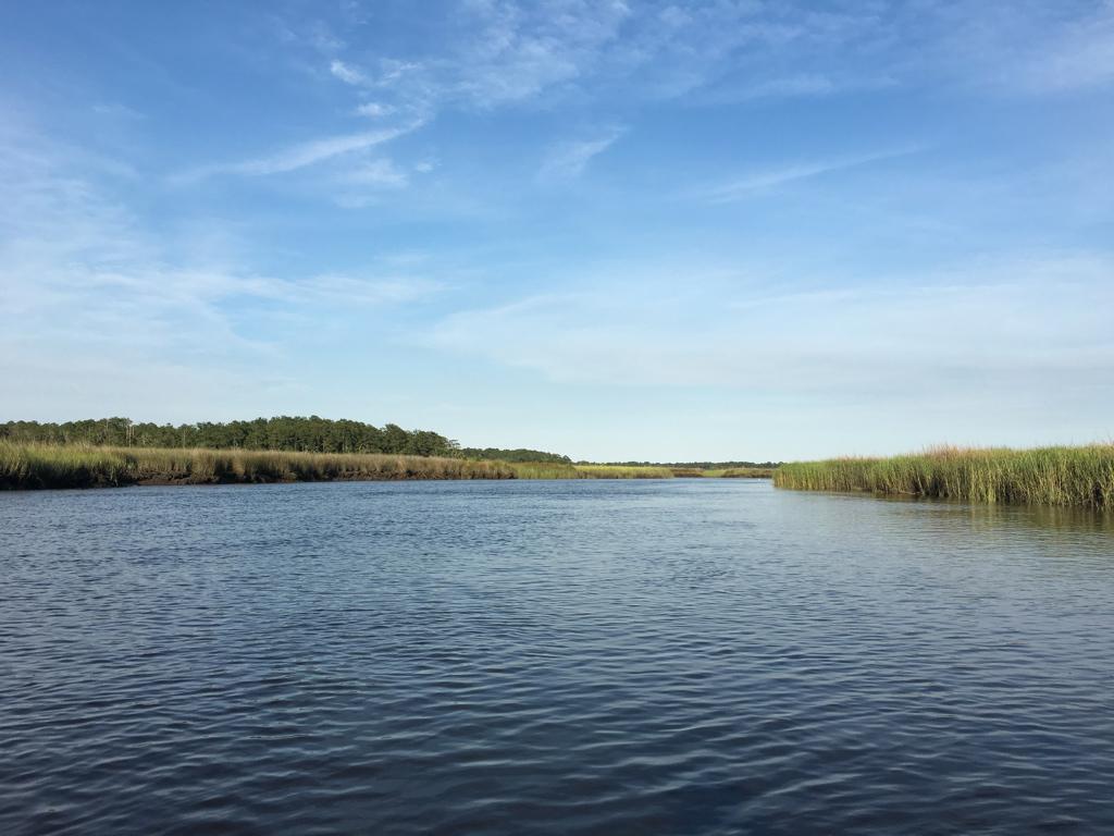 Coastal Marsh