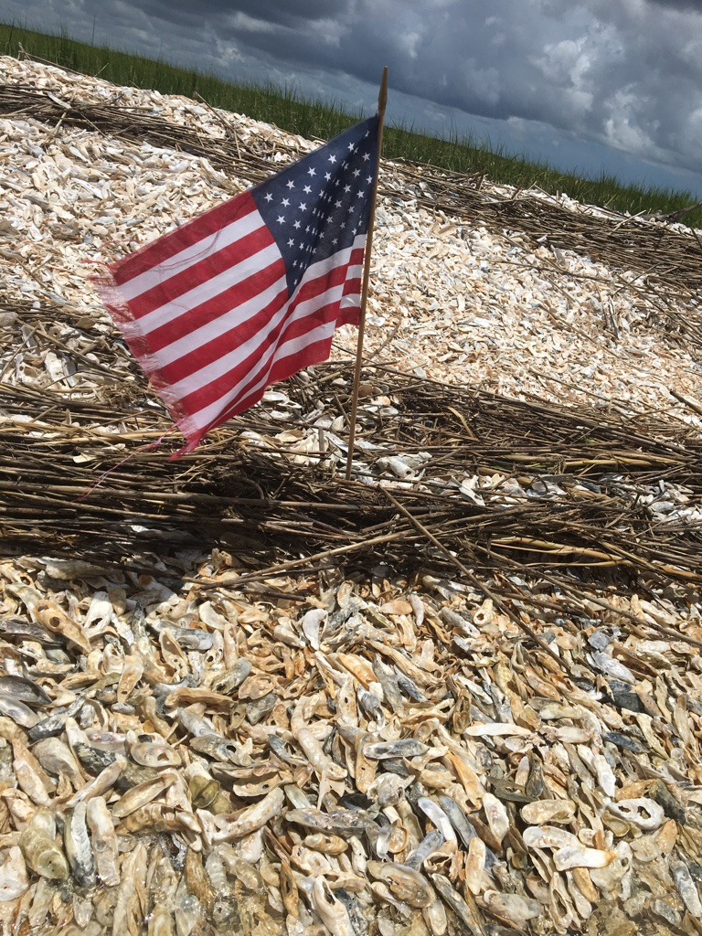 Oyster Bed Patriotic