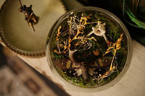 Moth in a Medium Vintage Jewelry Box with Cherub