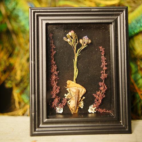 Grasshopper on Flower with Snake Vertebrae
