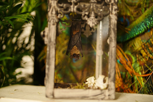 Bat in Small Lantern with Cat Vertebrae