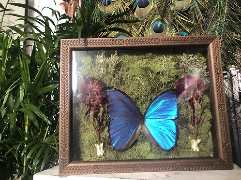 Morpho Butterfly Framed Terrarium
