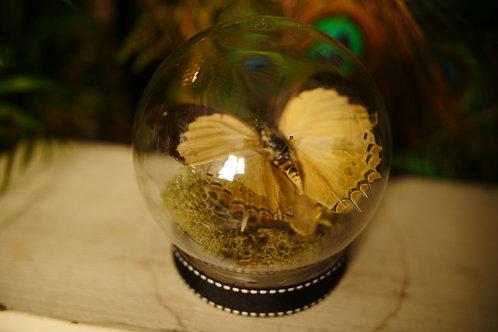Butterfly in Globe