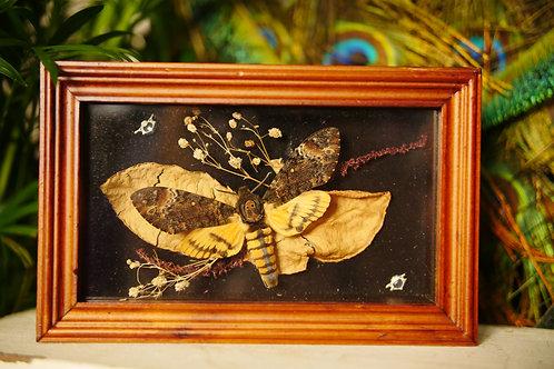 Death Head Moth with Leaves, Flowers and Snake Vertebrae