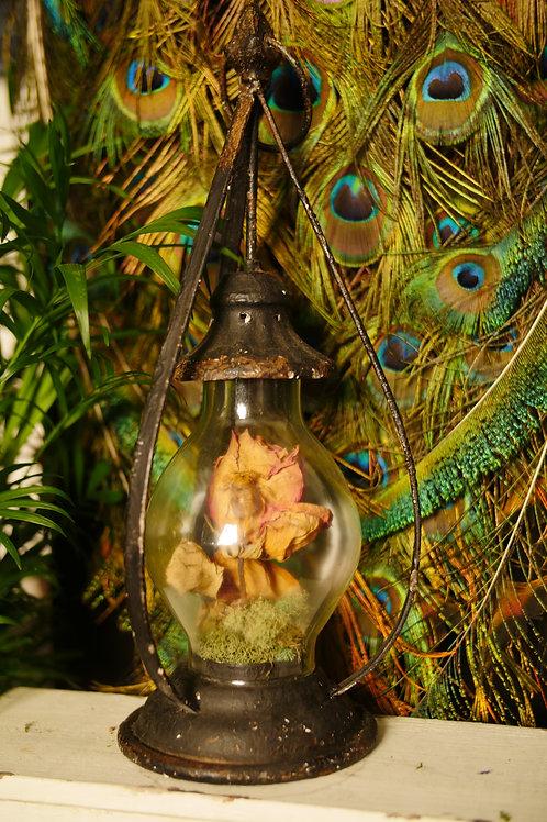 Bee on Rose in Lantern