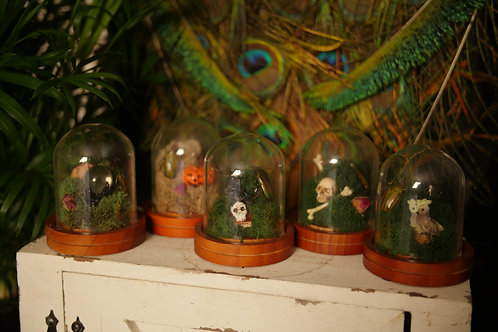 Mini Glass Domes with June Beetles