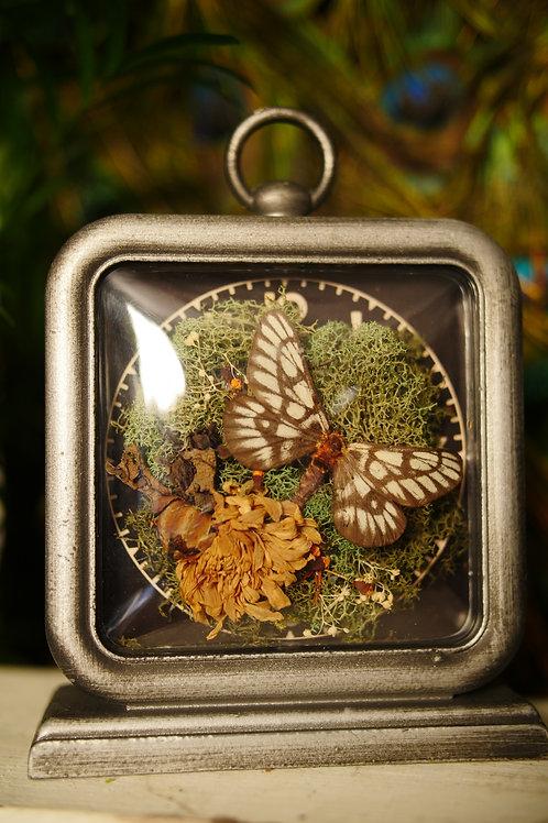 Moth in Clock