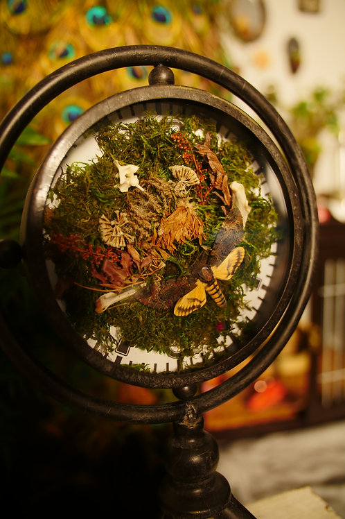 Death Head Moth in Clock
