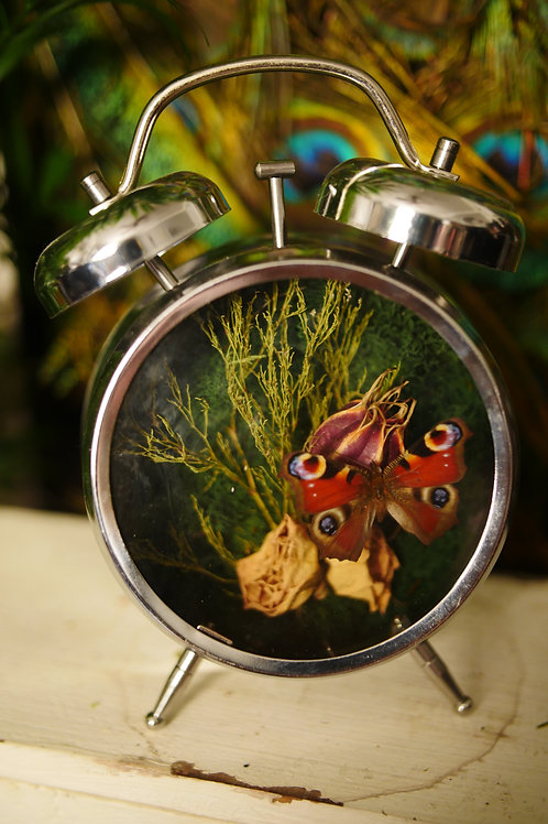 Butterfly Framed in Clock Terrarium