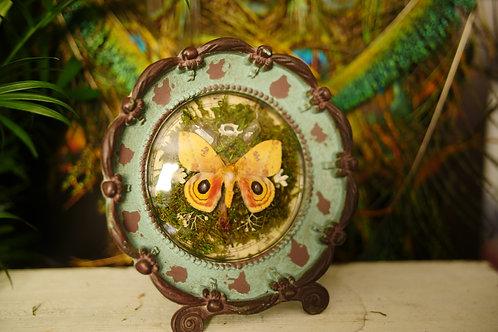 Saturn Moth in Clock with Snake Vertebrae
