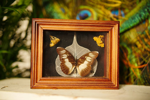 Butterfly with Skeleton Leaf