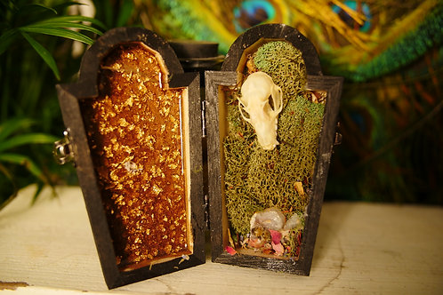 Mole Skull with Painted lady and Crystal  in Coffin
