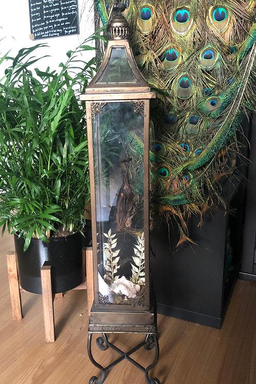 Bat in Vintage Lantern with Amethyst Crystal