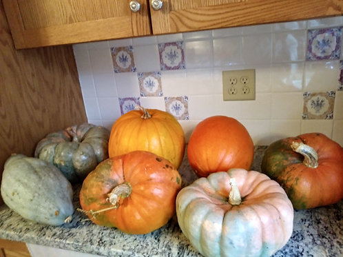 Large Decorative Pumpkins and Gourds