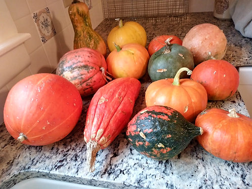 Small Decorative Pumpkins and Gourds