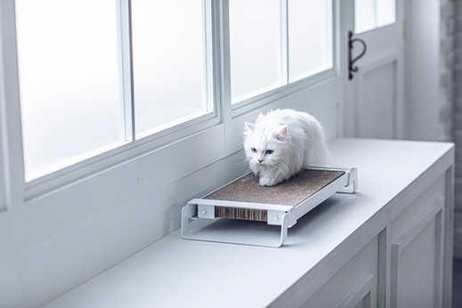 Cat Scratcher H / White