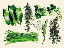 herbs-TRU1684174-1.jpg