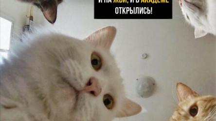 Какие вейп шопы открыты в Екатеринбурге?