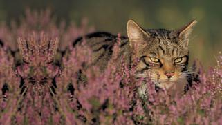 A window into a world of abundant wildlife