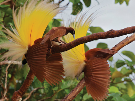 O que os gestores de T.I. tem em comum com a ave-do-paraíso?