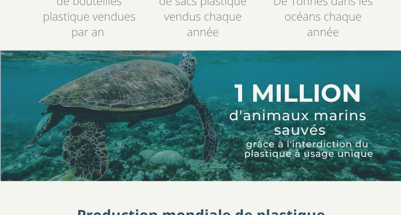 Infographie : Le plastique, entre pollution et revalorisation.