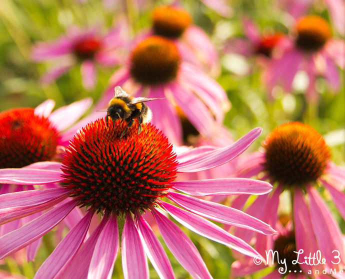 Bee kind to yourself... rest and take a break
