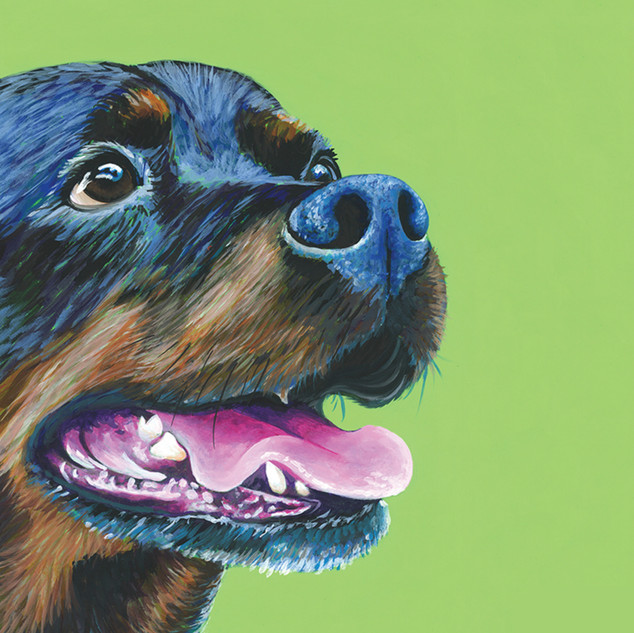 Rottwieller on Lime