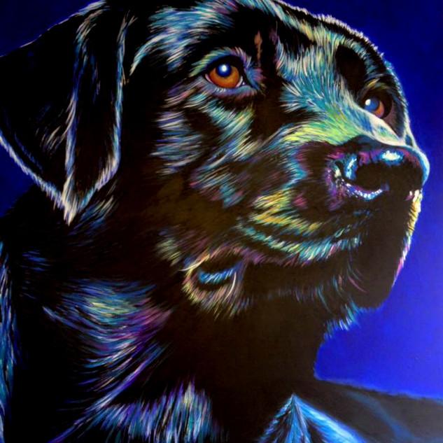 Black Labrador on Blue